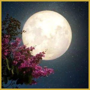 Full Moon Dance, Session 8, 7 May 2020 with Expressive Movement Founder, Sian Palmer