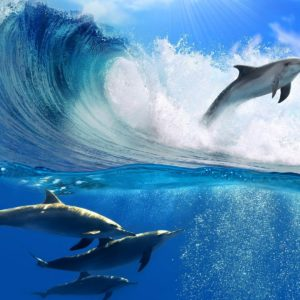 Ride the Wave, Session 33, 12 November 2020 with Expressive Movement Founder, Sian Palmer